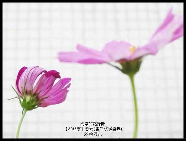 tn_DSC01502.JPG