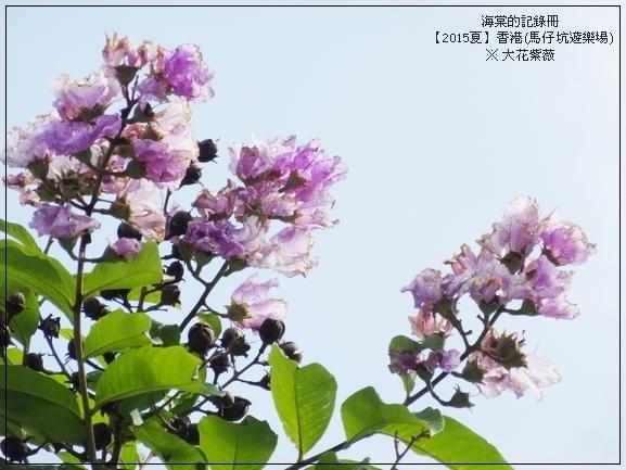 tn_DSC01746.JPG