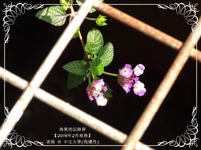 tn_DSC02640.JPG