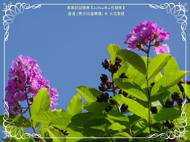 tn_DSC03156.JPG