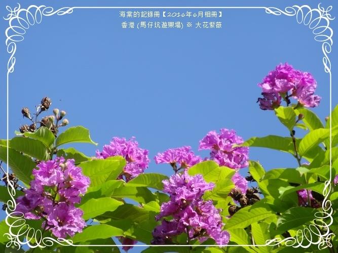 tn_DSC03159.JPG