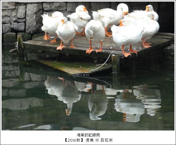 百花洲12.JPG