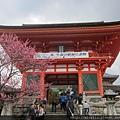 2012清水寺櫻花