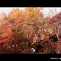 舊銀座通-輕井澤觀光協會