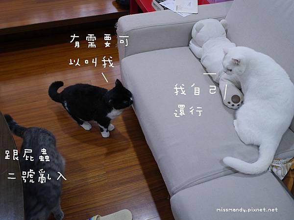 20140107080416.JPG