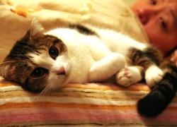 20110421寵物專欄.jpg