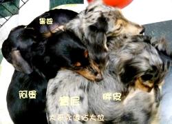 20110324寵物專欄