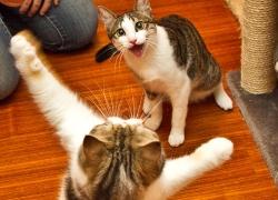 20110411寵物專欄