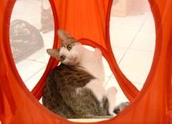 貓咪也愛盪鞦韆