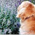 20110613寵物專欄