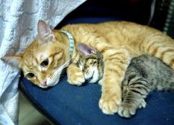 20110616寵物專欄