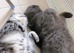 20110623寵物專欄