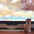 20110627寵物專欄