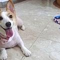 20110630寵物專欄