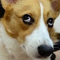 20110707寵物專欄用