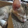 20110711寵物專欄用