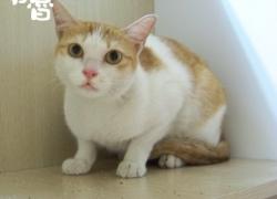 20110714寵物專欄