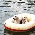 20110718寵物專欄用