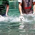 20110721寵物專欄用