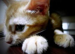 20110725寵物專欄