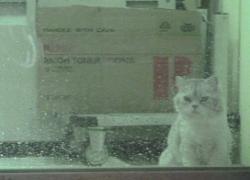 20110728寵物專欄