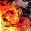 burn_index_album_04.jpg