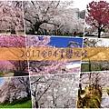 全日本賞櫻-大首頁.jpg