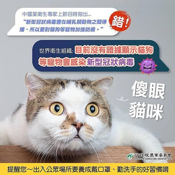 世界衛生組織:目前沒有證據顯示貓狗等寵物會感染新型冠狀病毒。圖片來源:行政院農業委員會