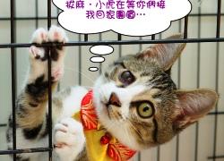 2011寵物專欄03