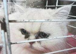 20110407寵物專欄