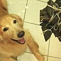 20110603寵物專欄