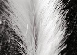 20110519寵物專欄
