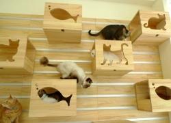 20110523寵物專欄