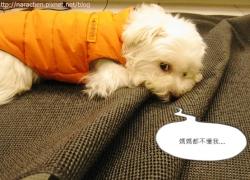 20110421寵物專蠻