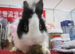 怒髮衝冠的兔子