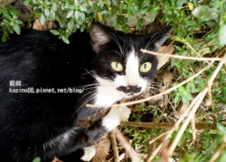 貓界也有卓別林
