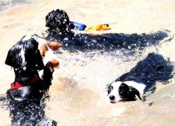 直擊狗兒的水上芭蕾