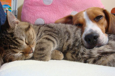 狗貓睡一起.jpg
