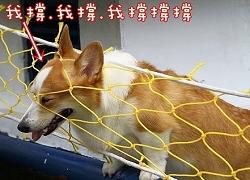 SO寵物_忍犬頭泡.jpg