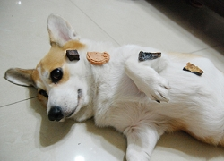 SO寵_人體餅乾.jpg