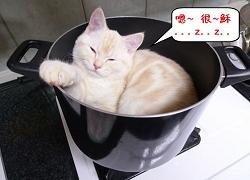 SO寵物_貓湯鍋.jpg