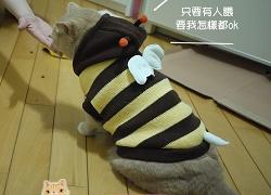 SO寵物_蜜蜂.jpg