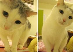 20110331寵物專欄