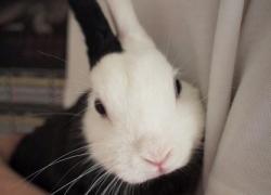 20110418寵物專欄