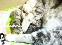 20110414寵物專欄