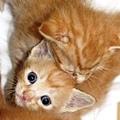 20110609寵物專欄
