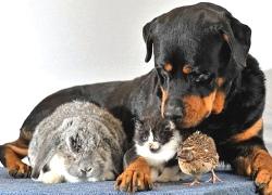 20110314寵物專欄