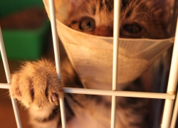 20110505寵物專欄