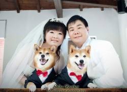 狗兒婚紗好幸福