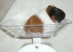 不要告訴我體重